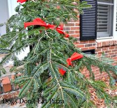 Fun, festive, fragrant and FREE! See how I made this free garland along railing - http://dogsdonteatpizza.com