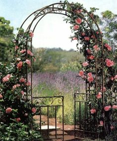 Metal Arbor with Gate - we picked up one like this for free! It can be our side garden gate. I'm thinking morning glories or nasturtiums over the top.
