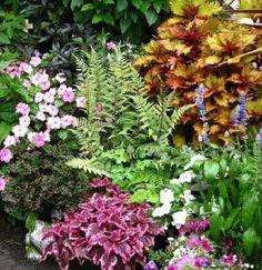 Combinación de plantas y flores | Cuidar de tus plantas es facilisimo.com