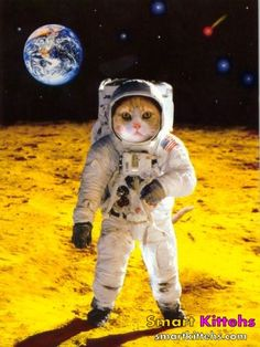 Peter always knew there would be cats in space