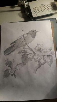 Yanlış yerde geziyor bu kuş :)