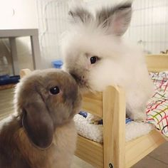 Love those bunny kisses!