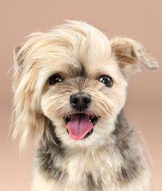 Drôles de chiens: Les photos avant et après leur toilettage