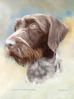 German Wire Haired Pointer Limited Edition Print by Equestrian Artist Joanna Stribbling Wildlife Paintings, Animal Paintings, Animal Drawings, Dog Anatomy, German Wirehaired Pointer, Pointer Puppies, Funny Dog Pictures, Outdoor Dog, Dog Portraits