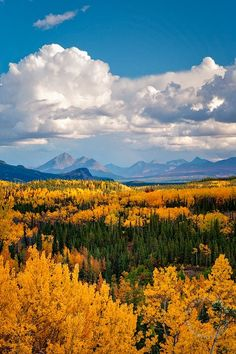 Denali National Park, Alaska Perhaps the most beautiful natural place we've been Lac Louise, Places To Travel, Places To See, Beautiful World, Beautiful Places, Landscape Photography, Nature Photography, Photos Voyages, Landscape Pictures
