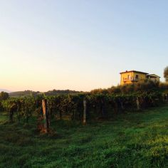 Look at the beauty of #Tuscany in early morning.....I can't get use to it.  www.guardastelle.com