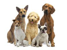 Welche Hunderasse ist die richtige für mich?