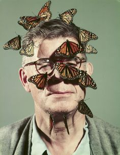 Butterfly breeder Carl Anderson with monarch butterflies on his face, 1954 John Dominis/Time & Life Pictures/Getty Image