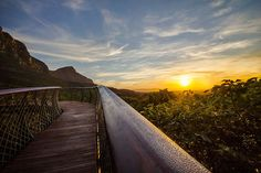 Tree canopy walkway in Kirstenbosch National Botanical Garden, Cape Town, South Africa