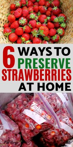 6 Ways to Preserve Strawberries Strawberry season can provide a lot of berries in a very short period of time. Learn how to preserve strawberries to enjoy all year long. These 6 ways with give you all you need to preserve strawberries for all year use! Easy Strawberry Preserves Recipe, Fresh Strawberry Recipes, Fruit Recipes, Recipes With Strawberries, Fresh Fruit, Freezing Strawberries, Dehydrated Strawberries, Frozen Strawberries, How To Preserve Strawberries