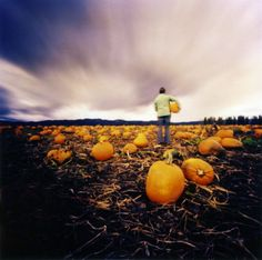 the pumpkin patch by pinhole | Flickr - Photo Sharing!