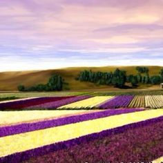 Beautiful flower field