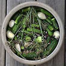 Lacto-fermented dill pickles – known to Russians as maloslnye ogurzi