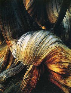 David Muench, mooie organische vormen, contrast in licht, warme tonen en een ruw randje door de groeven <3