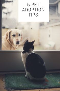 Cat Nutrition Facts black and white cat watching adult yellow Labrador retriever on window Labrador Retrievers, Vitamin D For Dogs, Pet Dogs, Dog Cat, Pet Pet, Doggies, Cat Nutrition, Cat Watch, Photo Chat