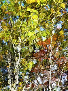 Abstract Trees Nature Photography Fine Art by ChristinaRolloArt