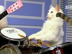 Tuna and the Rock Cats! Help the cat rock band get a new tour bus. http://www.kickstarter.com/projects/tunaandtherockcats/amazing-acro-cats-and-rock-cats-purr-fect-tour-bus