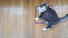 Felines appear powerless to resist the call of the #CatSquare