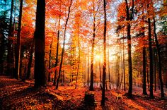 the light in the autumn trees