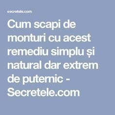 Cum scapi de monturi cu acest remediu simplu și natural dar extrem de puternic - Secretele.com Salvia, Metabolism, Good To Know, Natural Remedies, Health Fitness, Personal Care, Healthy, Pandora, Flora