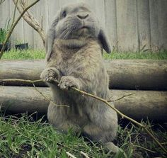 Bunny is just hanging out in the yard...doing what bunnies do!