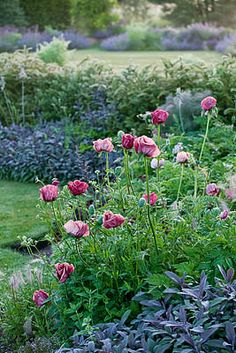 Poppies and more, Narborough Hall, Norfolk, Clive Nichols Garden Photography