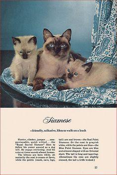 Siamese cats, 1957