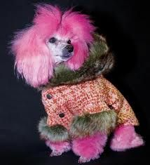 ropa para perros tejida - para una reina