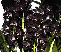 burgundy/black flowers