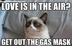Love-Is-In-The-Air-Grumpy-Cat-Funny-Valentines-Day.jpg (460×298)