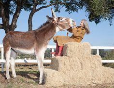 """Un burro  llamado 'Oklahoma Sam' celebra hoy  ser coronado como el asno más alto del planeta con 1 metro con 55 centímetros  de altura. El animal, de 54 años de edad, está al cuidado de Linda, una jardinera amante de los animales, quien asegura que Sam es su """"alma gemela"""""""