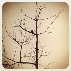 early bird on a tree #treeporn #RichardRivera