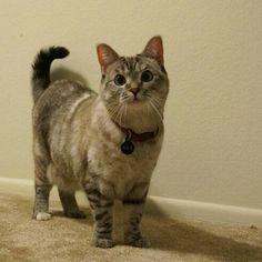 Top 10 des chats les plus populaires sur Instagram, ceux qui te mettent la misère en e-crédibilité avec vraiment j'aime chat et