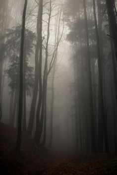 Stopping by Woods by Kathrin Loges und Jan Wunderlich, via Behance