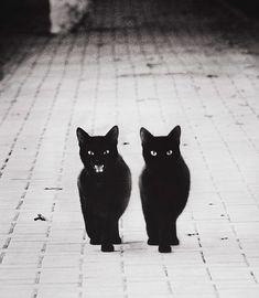 Os Mistérios dos Gatos em Preto e Branco