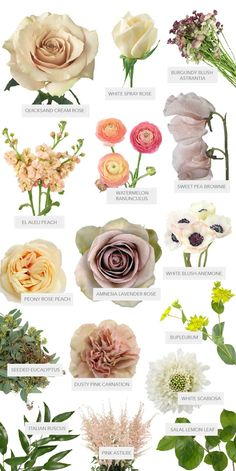 Fifty Flowers, Peach Flowers, Fresh Flowers, Colorful Flowers, Beautiful Flowers, White Flowers Names, Pretty Flower Names, Bouquet Of Flowers, Floral Flowers