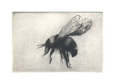 Dry Point Etching: Bumble Bee - Lynne Windsor (2012) < the way it's so simple but your attention is strongly brought to what the bee might be about to do >