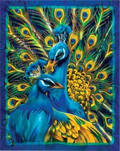 Peacock Drawings   Peacock Art