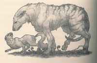 Carnaissial (on the left) and a hyaenodon (on the right)