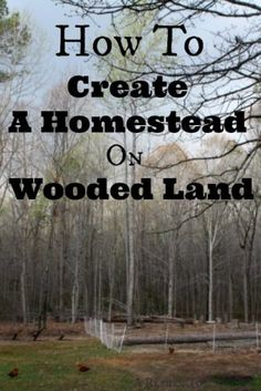 """the-dos-and-donts-of-choosing-heavily-wooded-land-for-your-homestead Homesteading  - The Homestead Survival .Com     """"Please Share This Pin"""""""