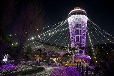 関東三大イルミネーション徹底比較!!「あしかがフラワーパーク」「東京ドイツ村」「江の島・湘南の宝石」