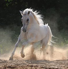 Almost like the horses in Camargue