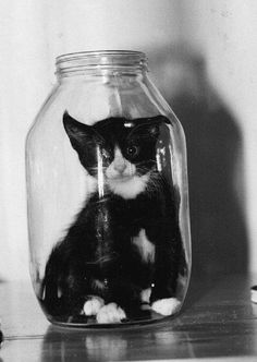 cat in a bottle writing prompt... have students write a story about how the cat got in the bottle