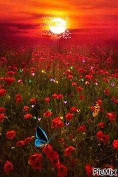 10 Amazing landscape pictures of flower field - Newspandas Beautiful Sunset, Beautiful World, Beautiful Flowers, Beautiful Places, Beautiful Morning, Beautiful Beautiful, All Nature, Red Poppies, Red Flowers
