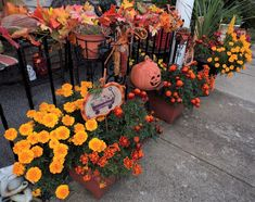 DEBBIE-DABBLE BLOG: Fall Garden Update and Fall Foliage, 2020 Winter Curtains, Craft Room Closet, Mini Flags, My Flower, Flowers, Autumn Garden, Some Pictures, Outdoor Rugs, Decorative Accessories