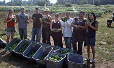 HandsOn Greater Portland volunteers in Portland, Oregon