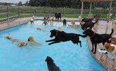 #verano #perro #mascota #piscina #diversion #juguetes #refrescante