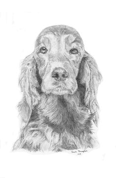This is a pencil drawing of an Irish Setter that I drew back in 2009. I found the original picture on the internet and had to draw it. It is one of my favorites!