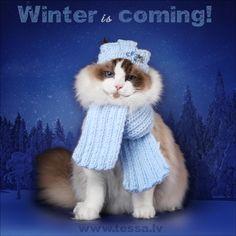 Tess Types Of Cats, Blues, Crochet Hats, Winter, Knitting Hats, Winter Time, Cat Types, Winter Fashion