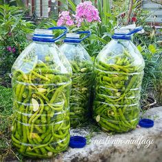 Our famous rounding pickles are the famous pickles of Thrace. Healthy Dinner Recipes, Cooking Recipes, Gardening Supplies, Turkish Recipes, Fermented Foods, Everyday Food, Superfood, Pickles, Food And Drink